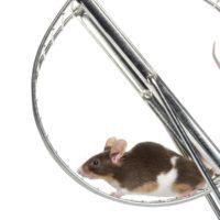 Laufen hemmt das Tumorwachstum bei Mäusen
