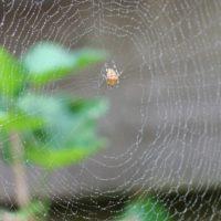 Lösung aus dem Netz: Synthetische  Spinnenseide für Medizinprodukte
