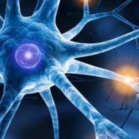 Auch Nicht-Muskelzellen leiten im Herz elektrische Impulse