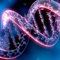 Genetische Risikofaktoren für Schlaganfall entschlüsselt