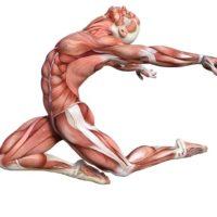 Definierte Muskeln: Zur Bedeutung von Krafttraining für die Gesundheit