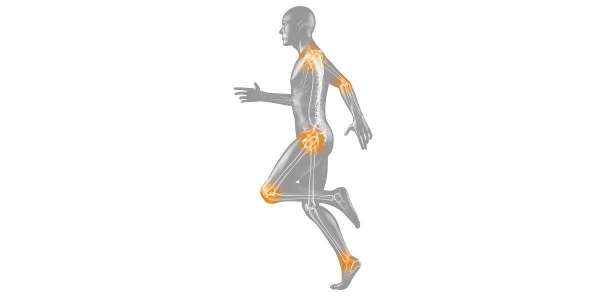 Optimierung der muskuloskelettalen Rehabilitation durch Einbezug individueller Faktoren der zellulären Plastizität