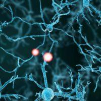 Neurologische Sportmedizin – weit mehr als Gehirnerschütterungen und periphere Nervenschäden!