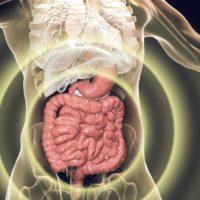 Menschliches Darm-Mikrobiom: Die Hypothese einer Darm-Muskel-Achse im Alter