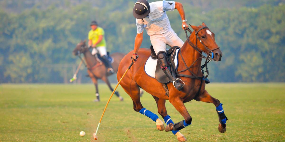 Verletzungen im Polo: Retrospektive Analyse von 103 Poloreitern