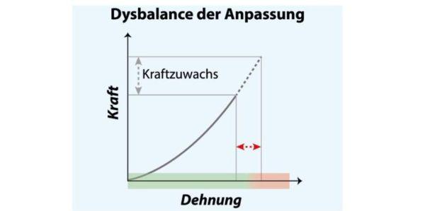 Sehentraining, Muskelkraft, Anpassung, Diagramm, Dehnung, Dysbalance