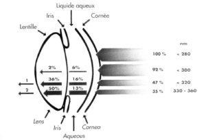 Schema: Strahlen-Augenlinse-Penetration