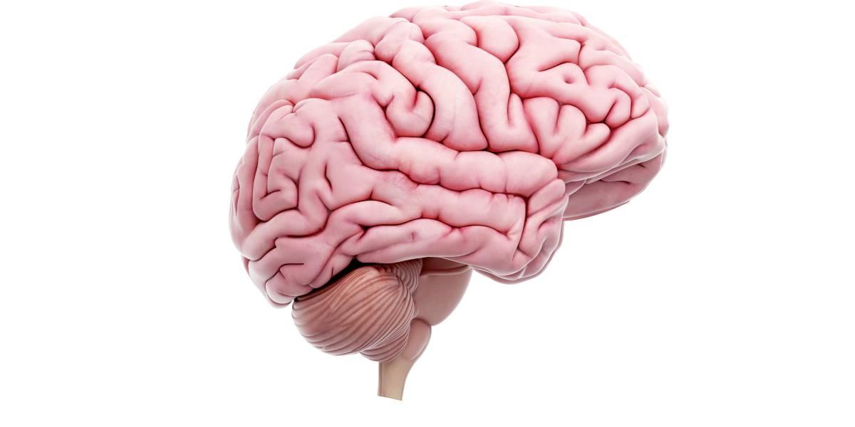 Sportlicher Lebensstil beugt Substanzverlust im Gehirn vor