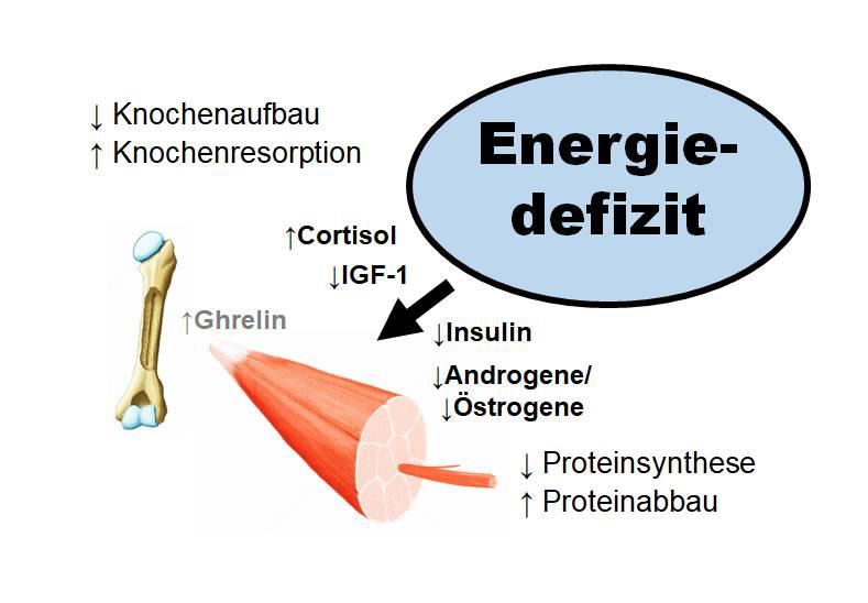 Auswirkungen eines Energiedefizits auf das muskuloskelettale System