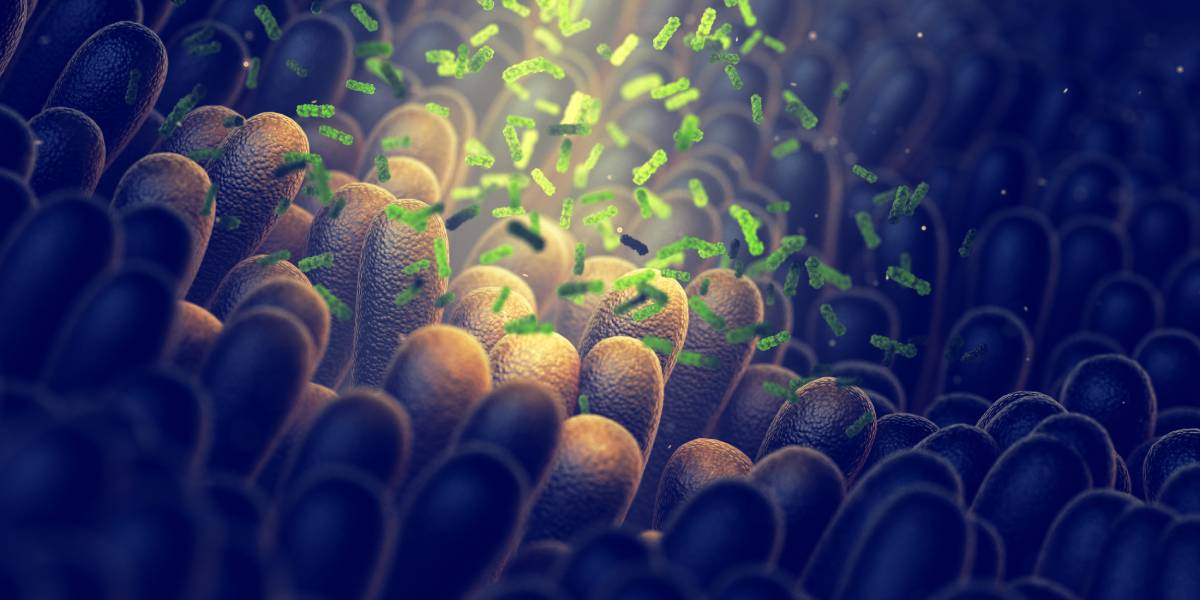 Darmmikrobiom bestimmt die Wirkung von Sport bei Prädiabetes