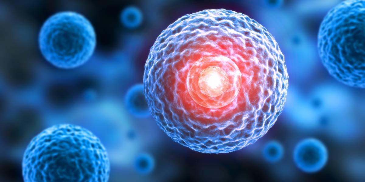 Intensive Sporttherapie nach allogener Stammzelltransplantation