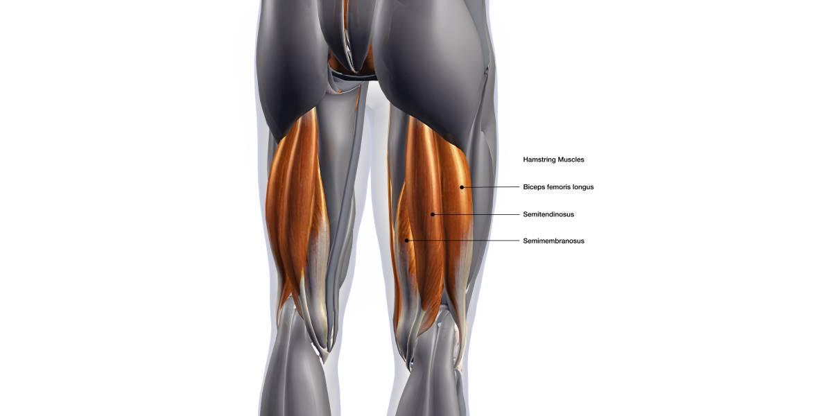 Risikofaktoren für Verletzungen der Hamstring-Muskulatur