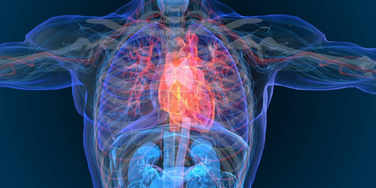 ESC Leitlinie 2020 für Sportkardiologie und körperliche Bewegung bei Patienten mit Herz-Kreislauf-Erkrankungen