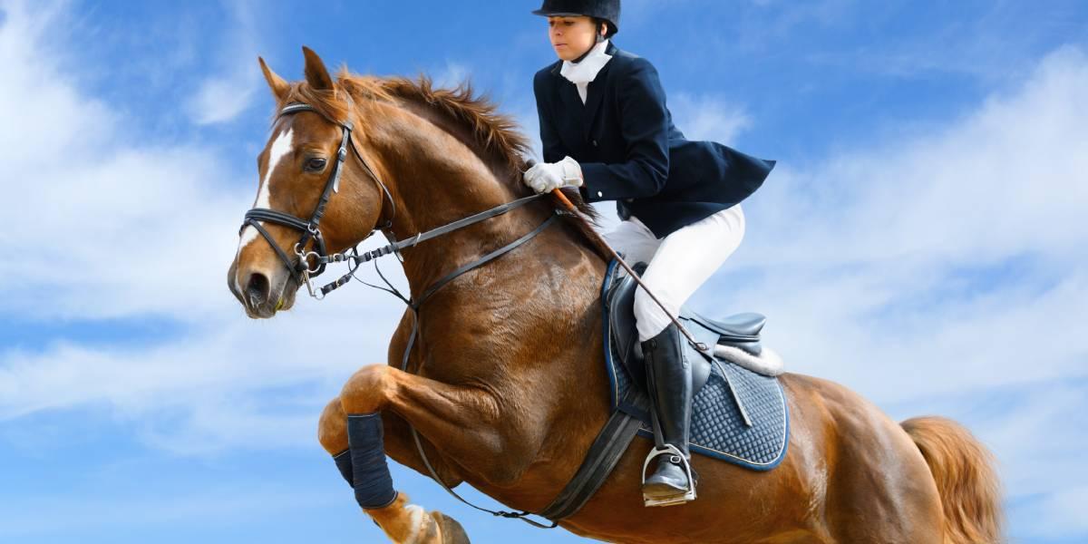 Verletzungen und Erkrankungen im Elite-Pferdesport: Eine prospektive Zwei-Saisonzeiten Studie