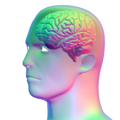Gehirnmasse von Ausdauersportlern und Nichtsportlern im Vergleich