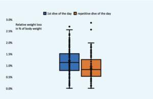 Sporttauchen, relativer Flüssigkeitsverlust in Prozent des Körpergewichts bei Erst- und Wiederholungstauchgang an einem Tag
